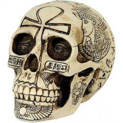 Egyiptomi koponya