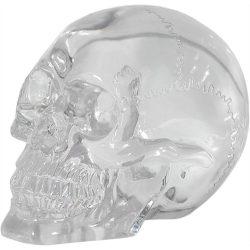 átlátszó koponya