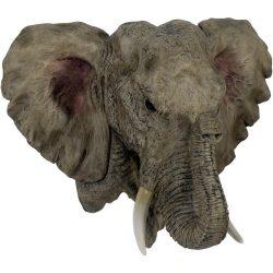 Elefánt fej